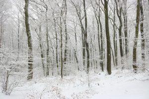 Weißer Januar