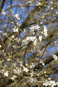 Frühling… trotz allem